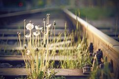 Starzy poręcze z drewnianymi tajnymi agentami, wśród których r dandelion kwiaty zdjęcia royalty free