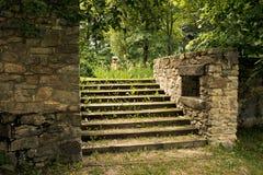 Starzy przerastający kamienni schodki w parku fotografia royalty free