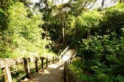 Starzy schodki na Wśród lasów Obrazy Royalty Free