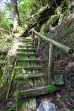 Starzy schodki w mech lesie w Yakushima wyspie obrazy stock