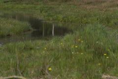 Starzy strumieni przepływy przez meado Obrazy Royalty Free
