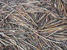 Starzy trzcinowi roślina kawałki zbliżają jezioro Obrazy Royalty Free