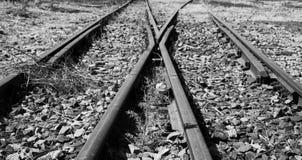 Starzy używać kolejowi ślada w duotone i małego flowe artystycznym conv Zdjęcie Royalty Free