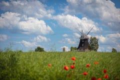 starzy wiatraczków stojaki na canola polu przed niebieskim niebem z białymi chmurami obraz royalty free