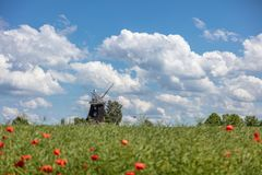 starzy wiatraczków stojaki na canola polu przed niebieskim niebem z białymi chmurami obraz stock