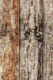 Starzy Wietrzejący Przegnili Krakingowi Supłający Floorboards Nawierzchniowy Textur Obrazy Royalty Free