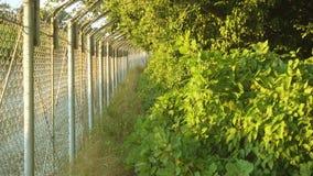 State border in forest. State border in forest, 4k stock video