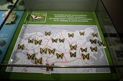 Geographic variability of the Machaons. Stock Photo