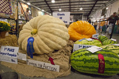 State Fair. A scene from the North Carolina Mountain State Fair. Giant Vegetable contest Royalty Free Stock Photography