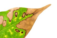 Nature background of leaf texture Royalty Free Stock Photos