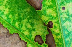 Nature background of leaf texture Stock Photos