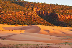 State Park Coral Pink Dunes Royalty Free Stock Photos
