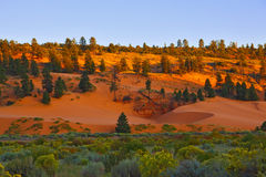 State Park Coral Pink Dunes at sunset. Royalty Free Stock Image
