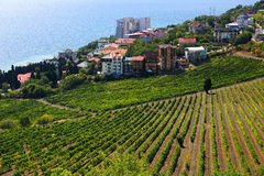 State Professor's Corner in Alushta. Vineyards. Crimea. Royalty Free Stock Photography