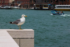 Static Seagull on White Parapet, Sea in Background Royalty Free Stock Photo