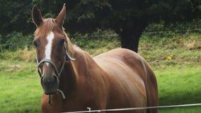 Mum and foal horses love. Horses love