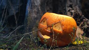 Static shot of terrible rotten pumpkin covered with mold near an old wooden stump is lit by a bright light that moves in stock video