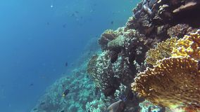 Static video, coral reef in the Red Sea, Abu Dub. Beautiful underwater landscape with tropical fish and corals. stock video footage