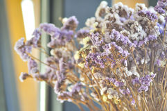 Statice  flower bouquet Royalty Free Stock Images