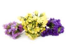 Statice flowers - Limonium Sinuatum Stock Photography