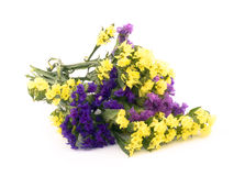 Statice flowers - Limonium Sinuatum Royalty Free Stock Image