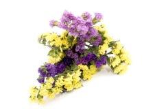 Statice flowers - Limonium Sinuatum Stock Image