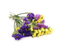Statice flowers - Limonium Sinuatum Royalty Free Stock Photo