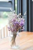Statice kwiat w wazie Obraz Royalty Free