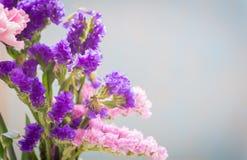 Statice sinuata flower Stock Photo
