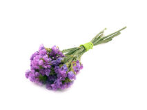 statice sinuatum limonium λουλουδιών Στοκ Φωτογραφία