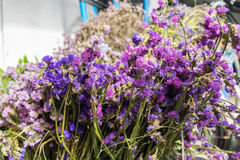 Staticebloemen bij bloemmarkt Stock Afbeeldingen