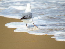 A station on the beach seagull Royalty Free Stock Photos