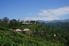 Station de vacances idyllique dans la plantation de thé Image stock