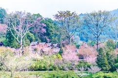Station de vacances thaïlandaise sur l'angkhang de doi, Chiang Mai Thaïlande Photographie stock
