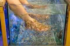 Station thermale de pied par des poissons de docteur, le poisson d'eau douce utilisé pour le traitement image libre de droits