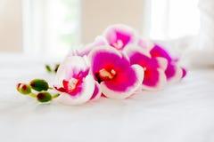 Station thermale et soins de santé avec des fleurs et des serviettes Produits naturels à photographie stock