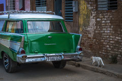 Station wagon del Oldtimer in Cuba con il gatto Fotografia Stock