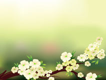 A stationery with fresh white flowers Royalty Free Stock Photos