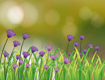 A stationery with a garden of violet flowers Stock Photography