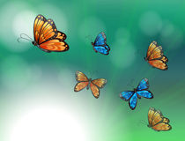 A stationery with orange and blue butterflies Royalty Free Stock Image