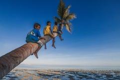 Stationieren auf einem Baum Lizenzfreie Stockfotografie