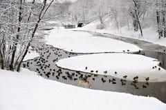 Stationnement à Moscou avec des canards après la chute de neige importante Photo libre de droits