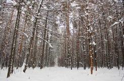 stationnement 01 de l'hiver Images libres de droits