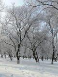 Stationnement 1 de l'hiver Photo stock