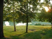 Stationnement : arbre, lames de vert Images stock