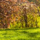 Stationnement au printemps photo libre de droits