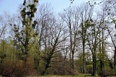 Stationnement au printemps photos stock