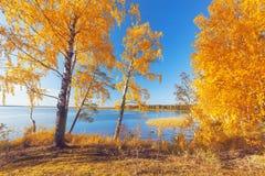 Stationnement automnal Arbres et lames d'automne Images stock