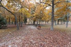 Stationnement avec des lames d'automne Photo stock
