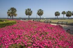 Stationnement avec les fleurs roses Images libres de droits